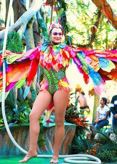 Bird Aerialist, Parade of Dreams | Flickr: Intercambio de fotos