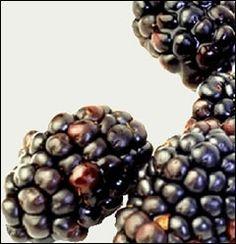 Blackberries green-thumb-glory