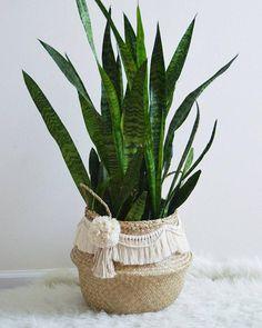 Pom Pom and tassel macrame sea grass basket. House Plants Decor, Plant Decor, Plant Basket, Ikea Basket, Macrame Design, Macrame Projects, Indoor Plants, Flower Pots, Planters