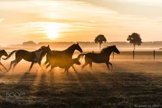 Running horses .... by johan31071967decocq #nature #mothernature #travel #traveling #vacation #visiting #trip #holiday #tourism #tourist #photooftheday #amazing #picoftheday