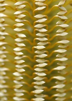 Love this pattern of a plant...very fragile!