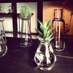 #蠣崎允 さんの水耕栽培のできる花器。 #フィールドミュージアムsanuki2014 #蠣崎マコト