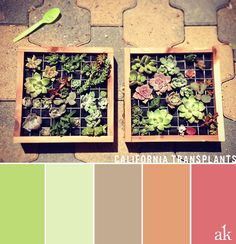 a summer-succulent-inspired color palette // light green, tan, earthy orange, and muted pink