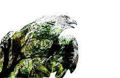 Povestea unui vultur care se credea găină | PictoLandia Owl, Bird, Animals, Animales, Animaux, Owls, Birds, Animal, Birdwatching