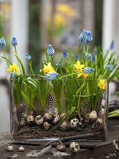 Minna Merche Schmidt's arrangement with eggs, feathers and spring flowers. Beautiful!