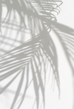 Palm leaves shadows.