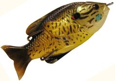 "Jawbone Hollow Sunfish 3"": Copper Pumpkin Seed"