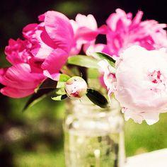 Divine Pink Peonies :)
