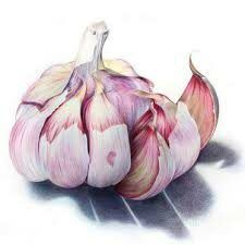 Vegetable Illustration, Illustration Art, Art Illustrations, Painting & Drawing, Watercolor Paintings, Colour Drawing, Watercolours, Vegetable Painting, Vegetable Drawing