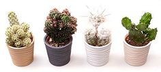 Modern Ribbed Potted Cactus Set - ideal gift for a friend... https://www.amazon.co.uk/dp/B073RFVRSC/ref=cm_sw_r_pi_dp_x_wHwfAbPN1332J
