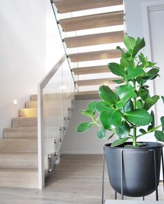 Stairs, Modern, Plants, House, Inspiration, Future, Home Decor, Biblical Inspiration, Stairway