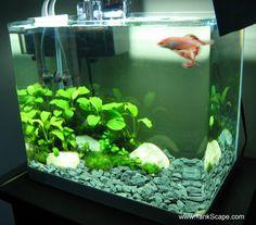 betta tank set ups | Tank Scape: My Betta Tank: The River Bed