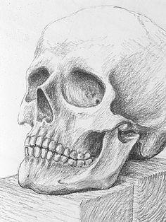 zeichnungen mit bleistift tiger - Google-Suche