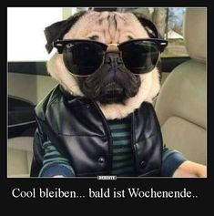Cool bleiben... bald ist Wochenende.. | Lustige Bilder, Sprüche, Witze, echt lustig
