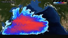 Simulated spreading of the contaminated Fukushima waters in summer 2012, 16 months after the nuclear disaster.