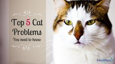 Top 5 Cat Problems You Should Know! Cats are precious and adorable. However, just like with any new family member you get, there will always be a chance of facing negative issues that might make you feel momentarily sad, angry, or even resentful toward your cat. But we can help you feel that love for your pet again!
