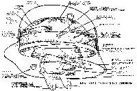 M.16 Stahlhelm cutaway detail