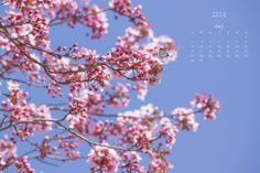 Calendario de Mayo , disfruten la primavera ¡¡¡