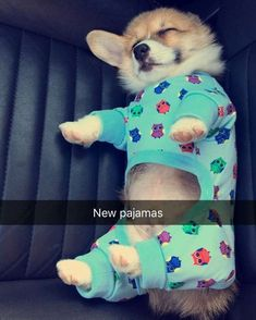 Corgi in Pajamas ✧ lustedsky ✧ Cute Corgi, Corgi Dog, Cute Puppies, Dogs And Puppies, Teacup Puppies, Cute Funny Animals, Funny Animal Pictures, Cute Baby Animals, Animals And Pets