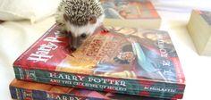 Adorable Animals Reading Books