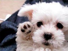 puppy waving