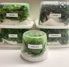 How to store leafy greens and herbs - Vegan Tips Healthy Life, Healthy Living, Cooking Time, Food Hacks, Vegan Recipes, Good Food, Food And Drink, Herbs, Ethnic Recipes
