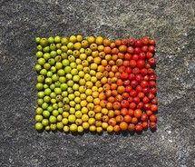 andrew goldsworthy apples | andy,goldsworthy,andy,goldwworthy,homage,berries,colours,nils,udo ...