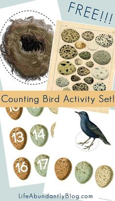 FREE Counting Bird Activity Set GORGEOUS activity kit for preschoolers all the way through elementary to be used for multiplication, basic counting, subtraction, addition, number recognition- using gorgeous vintage birds and eggs. Nature Activities, Preschool Activities, Kids Printable Activities, Printables, Preschool Workbooks, Montessori Science, Montessori Homeschool, Preschool Curriculum, Spring Activities