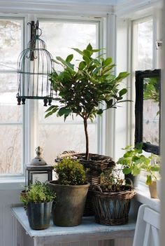 Plants make a nice addition to any vignette