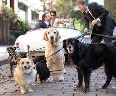 Wedding Photo: Puppy Love