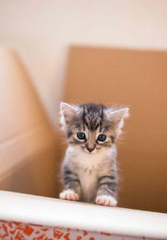 precious little baby