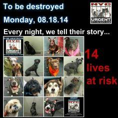 Will be murdered Aug.18.  Share-adopt-pledge