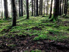 naturensdronning: Skogens mangfold
