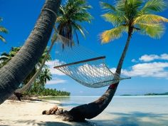 Place to Relax Between Two Palm Trees that Shade on The Beach