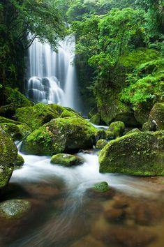 Wakayama, Japan Forest Waterfall, Nature Landscape, Fantasy Landscape, Wakayama, Beautiful Waterfalls, Beautiful Landscapes, Beautiful Places To Visit, Beautiful World, Amazing Nature