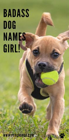 A tough female dog needs a name that shows her resilience and tough character. Find some great names in the current post! #BadassNamesForDogsGirl #BadassDogNames #BadassDogNamesGirl #BadassDogNamesFemale Cool Female Dog Names, Tough Dog Names, Badass Names, Girl Dog Names, Best Dog Names, Puppy Names, Country Dog Names, Cute Country Girl, Rottweiler Dog Names