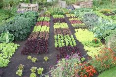 Charles Dowding's no dig garden. Sigh.