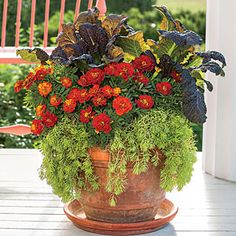 Best Ideas for Fall Container Gardening   Stunning Marigold Fall Container   SouthernLiving.com