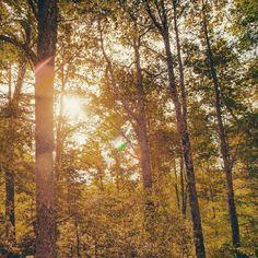 #bosque #bymelinka