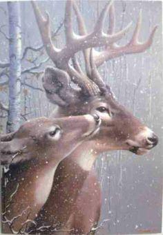 Doe and Buck - (Christmas, winter, deer) Deer Photos, Deer Pictures, Animal Pictures, Beautiful Creatures, Animals Beautiful, Animals And Pets, Cute Animals, Deer Art, Tier Fotos