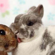 Bunny kisses<3