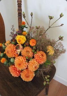 fall 1001416_375651155897651_348824459_n sachi rose