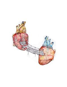 I have an obsession with the human heart