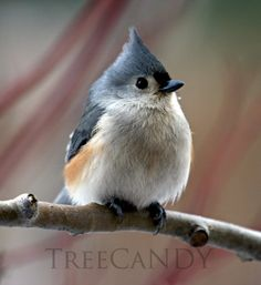 A Tufted Titmouse and His Snowflake by treecandy on Etsy, $25.00