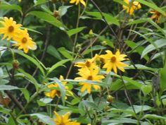 flores de Salta
