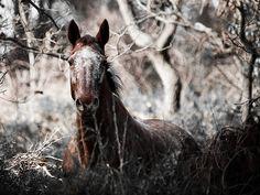 Le mécanisme de thermorégulation chez le cheval | demivolteface