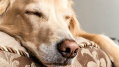 People Are Losing Their Minds Over What Dogs Dream About