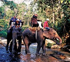 20 things to do in Thailand - Elephant Trekking - Riding a Jumbo will be crossing this off my bucket list Thailand Honeymoon, Thailand Travel, Places To Travel, Places To See, Elephant Trekking, Siam, Thai Travel, Thailand Elephants, Thailand Adventure
