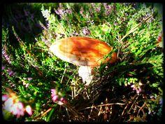 Mushroom by swapthat on DeviantArt Stuffed Mushrooms, Deviantart, Artist, Photography, Stuff Mushrooms, Photograph, Photography Business, Photoshoot, Fotografie