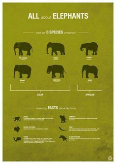 Types of elephants
